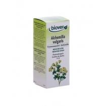 Vrouwenmantel / Alchemilla Vulgaris - Biover