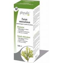Camellia Sinensis - Plantendruppels - Physalis