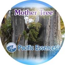 MOTHER TREEPACIFIC ESSENCES