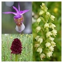 Orchid - Inner Stillness 10ml - Set 3
