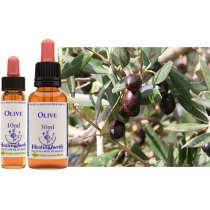bach healing olive/olijf