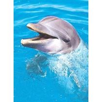 Dolphin/Joy (Dolfijn/Vreugde)