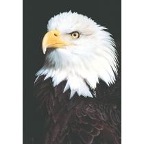 Eagle/Spirit (Adelaar/Geest)